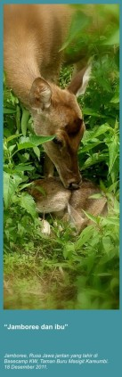 jambore dan ibu.jpg