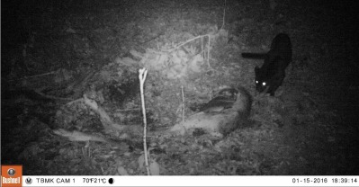 macan kareumbi